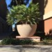 Fallbrook Planter 1 thumbnail