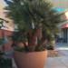 Fallbrook Planter 8 thumbnail